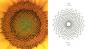 Der Goldene Schnitt. Die mathematische Sprache der Schönheit. Bild 4