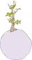 Der Kleine Prinz Buch und Affenbrotbaum Baobab im Set. Bild 4
