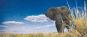 Die letzten Wildnisse der Erde - Die faszinierendsten Nationalparks und Naturreservate der Welt Bild 4