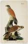 Die Vögel Mitteleuropas. Bild 4