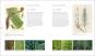 Einblicke in die geheime Welt der Pflanzen. Inside the Secret World of Plants. Bild 4