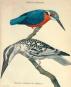 Geschichte der Vögel. Histoire des Oiseaux. Bild 4