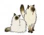 Große Katzen, kleine Katzen. Ein bebilderter Überblick über die Katzen dieser Welt. Bild 4