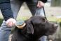 Hundebürste für die perfekte Fellpflege. Bild 4