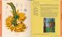 Kew Gardens. Das Kochbuch. 101 Rezepte mit Pflanzen aus aller Welt Bild 4