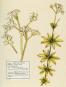 Mein Herbarium. Kräuterschätze und die Lust des Sammelns. Bild 4