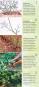 Obstgehölze schneiden. Schritt für Schritt zur reicher Ernte. Bild 4