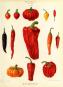 Pflanzen und Kultur. Eine illustrierte Weltgeschichte der Botanik. Bild 4