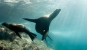 Planet Ocean - Das Meer und seine Bewohner 3 DVDs Bild 4