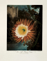 Robert John Thornton. The Temple of Flora. Bild 4