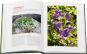Staudenraritäten. Gartenjuwelen kultivieren und sammeln. Bild 4