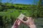 Taschenmesser mit Olivenholzgriff. Bild 4