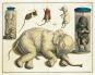 Albertus Seba - Das Naturalienkabinett - Vollständige Ausgabe der kolorierten Tafeln 1734-1765 Bild 5
