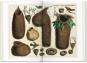 Albertus Seba. Cabinet of Natural Curiosities. Das Naturalienkabinett. Bild 5