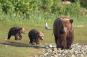 Amur - Asiens Amazonas. DVD Bild 5