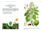 Die Baumarten Deutschlands erkennen und bestimmen. Bild 5
