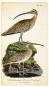 Die Vögel Mitteleuropas. Bild 5
