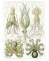 Ernst Haeckel. Kunstformen der Natur. Posterbuch mit 22 Postern. Bild 5