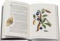 Maria Sibylla Merian. Blüten, Raupen, Schmetterlinge. Der Raupen wunderbare Verwandlung. Bild 5