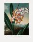 Robert John Thornton. The Temple of Flora. Bild 5