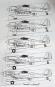 Waffen-Arsenal - Torpedo-Flugzeuge der Luftwaffe 1939-1945 Bild 5