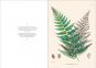 Alexander von Humboldt und die botanische Erforschung Amerikas. Bild 6