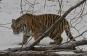 Amur - Asiens Amazonas. DVD Bild 6