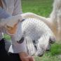 Bürsthandschuh für Haustiere. Bild 6
