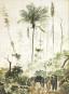 Die Erkundung Brasiliens. Friedrich Sellows unvollendete Reise. Bild 6
