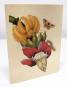 Grußkartenbox »Maria Sibylla Merian«. Bild 6