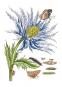 Maria Sibylla Merian. Blüten, Raupen, Schmetterlinge. Der Raupen wunderbare Verwandlung. Bild 6