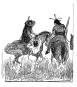 Max Slevogt. Coranna - Eine Indianergeschichte. Vorzugsausgabe mit Slevogt-Siebdruck. Bild 6