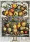 Geschichte der Gartenkultur. Von Blumisten, Kunstgärtnern, Mistbeeten und Pomologien. Bild 7