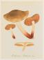 Jean-Henri Fabre. Pilze. Champignons. Bild 7