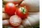 Saatgut-Box »Tomaten«. Bild 7